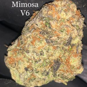 purple mimosa v6 weed